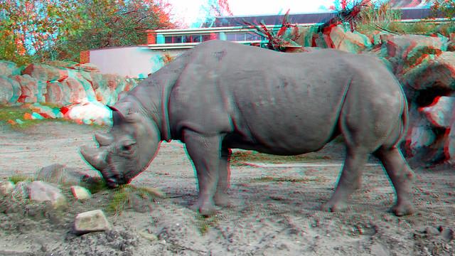 Eastern Black Rhino Blijdorp Zoo Rotterdam 3D