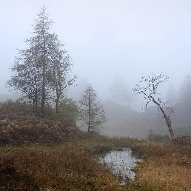 Foggy Holme Fell
