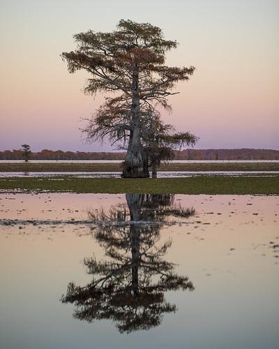 2020 caddolake easttexas mabrycampbell november texas usa autumn fall image photo photograph karnack unitedstates harrisoncounty tree trees landscape lake baldcypress sunset fav10 fav20 fav30