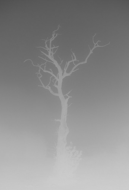 Ghost Tree.