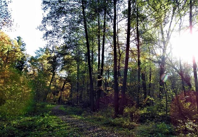 Revier Blankenfelde Herbst 2020 Hutewald