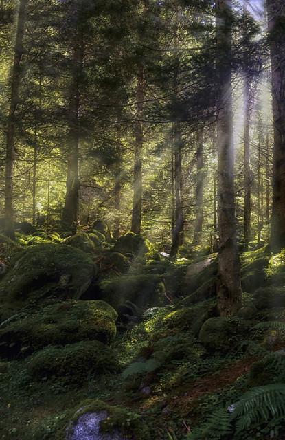 Nel fitto del bosco