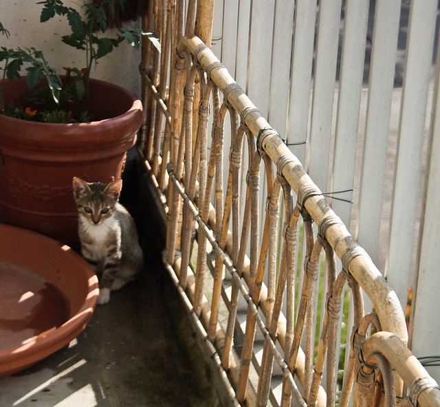Petite Galice sur le balcon