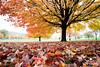 October Wanes