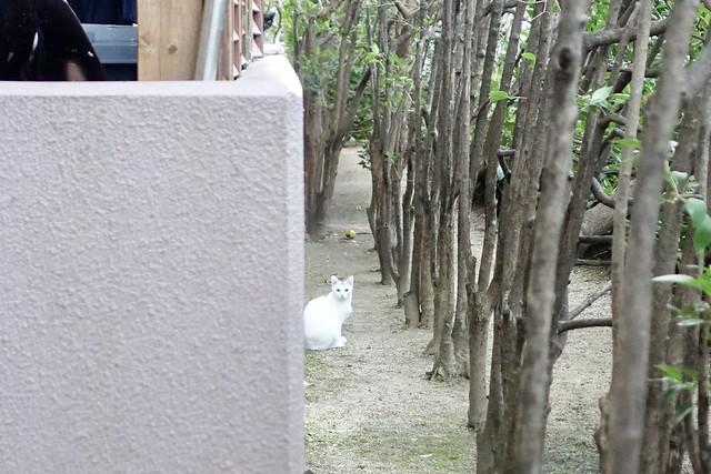 Today's Cat@2020−11−04