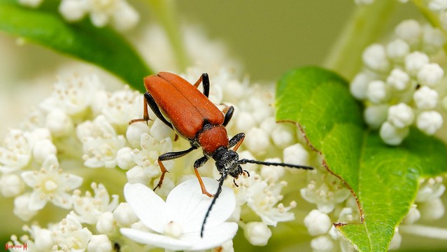 #Insect - 9041