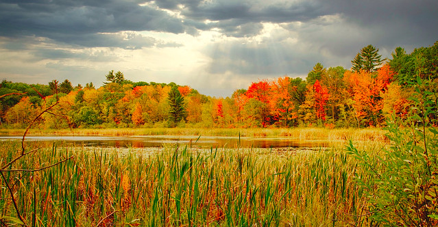 Height Of Color:  Foster Lake