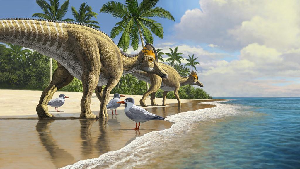 Duckbill dinosaurs walking along a beach