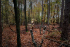 Mein Pfälzerwald - Zauberwald