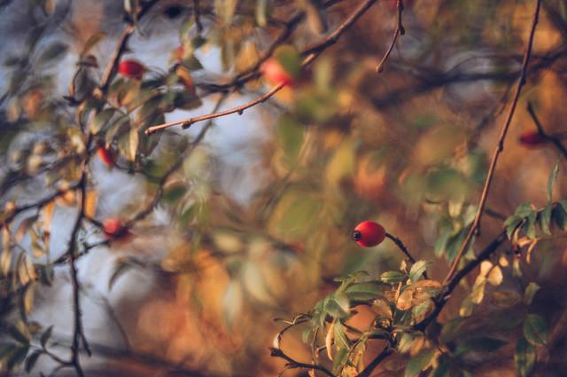Golden hour in November