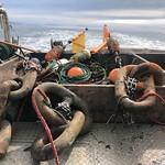 oceanographic moorings_2020