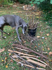 Bella at stick buffet