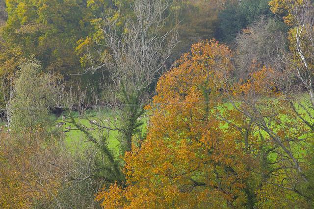 Autumn Rural Sussex