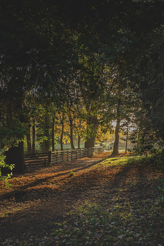 wales acton park rhosnesni wrexham sunrise ladscape light leading line shadow depth radial filter photoshop frightened tree photography frightenedtreephotography wright becky adrian
