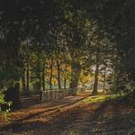 Sunrise: Acton Park
