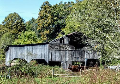barns barn farm farmland landscape canon southwestvirginia nicklesvillevirginia scottcountyvirginia