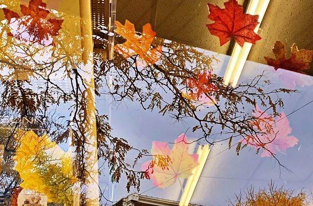 Autumn Awesomeness #13