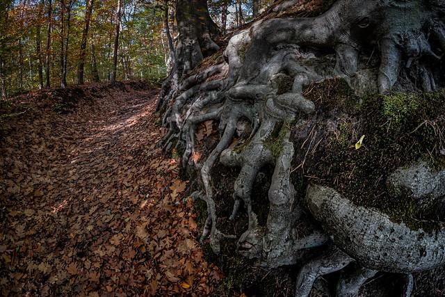 conquering roots (in Explore)