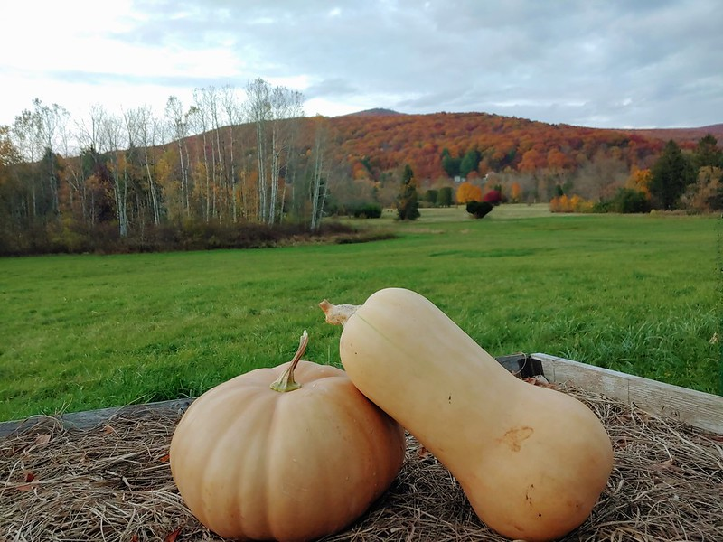 Butternut squash & Long Island Cheese Pumpkin