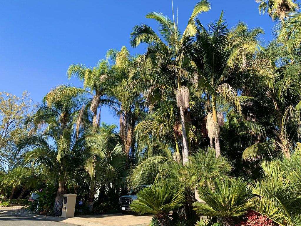 Amazing Palm Garden