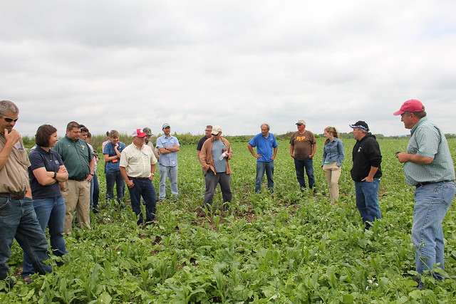 Lower Fox Demonstration Farms field day participants view a multi-species inter-seeded test plot