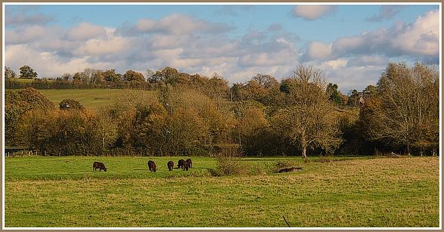 Meadowland.