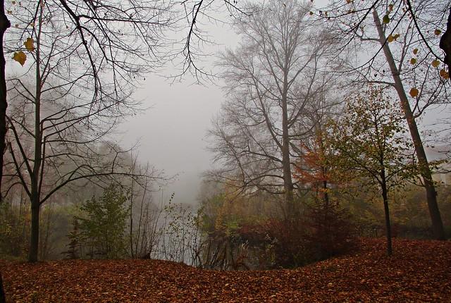 Nebelmorgen im Englischen Garten