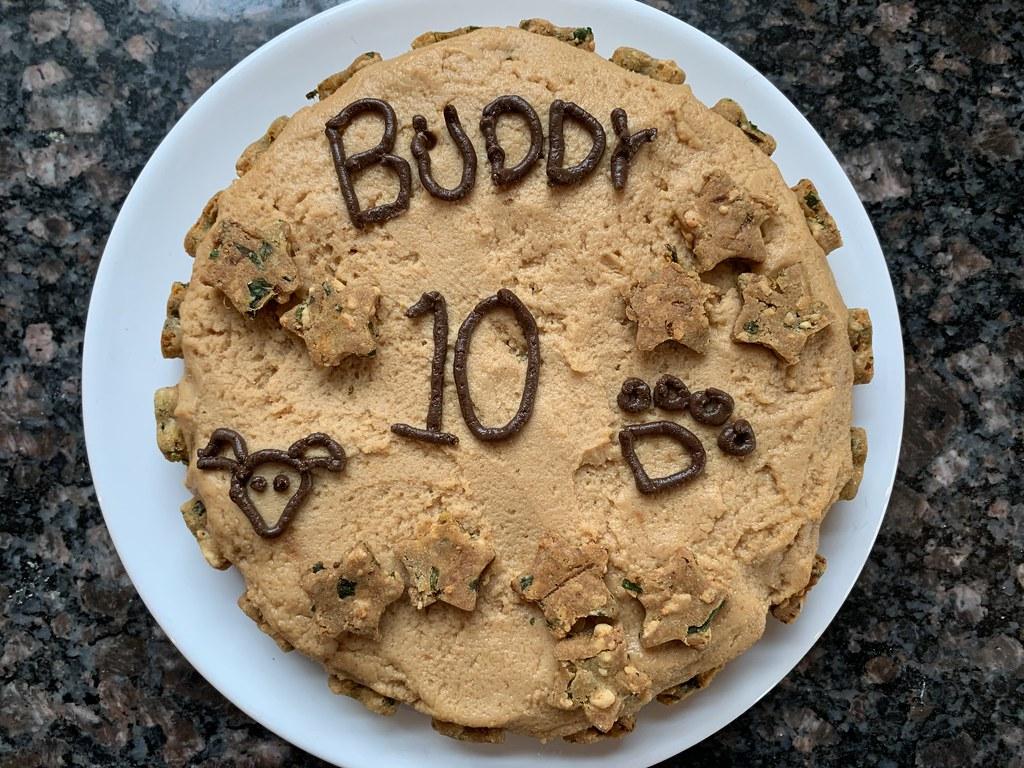 Buddy at 10