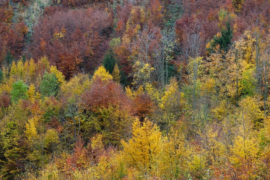 Fall foliage in in Kőszeg Mountains, Őrség National Park, Hungary