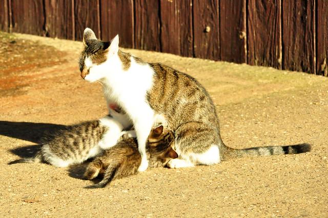 November 2020 ... Katze säugt zwei Junge ... Brigitte Stolle