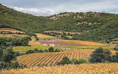 Vignes près du Pic de Vissou