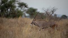 Meru National Park-7465
