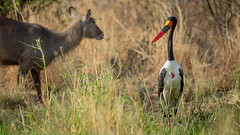 Meru National Park-7229