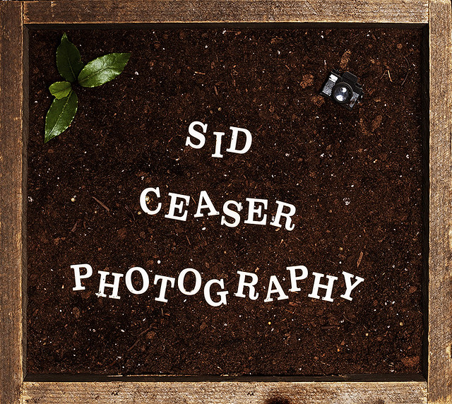 Sid Ceaser Photography • Flower Bed