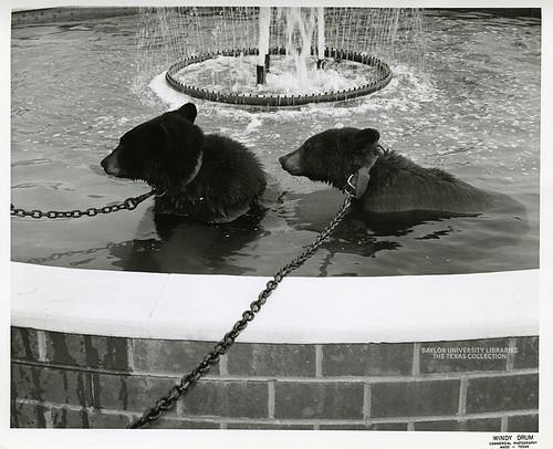 Baylor University-Bear Mascot-1960s