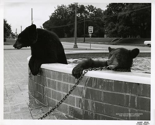 Baylor University-Bear Mascot-2-1960s
