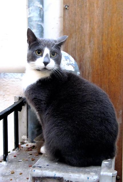 Ο γείτων γάτος 1.    The neighbour tomcat 1.