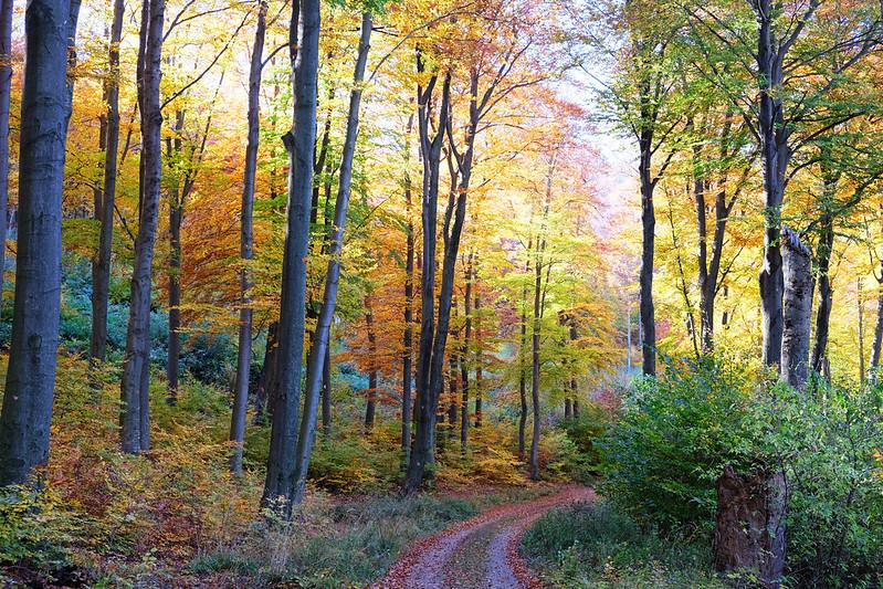 Kőszeg Mountains, Őrség National Park, Hungary