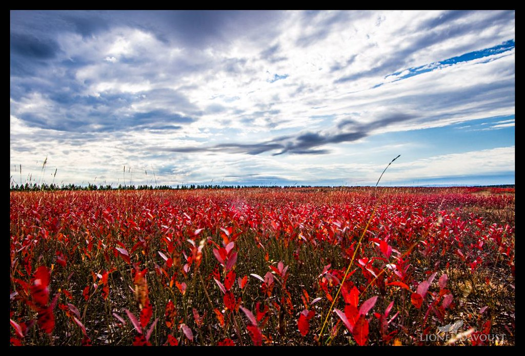 Cranberry fields (for ever)