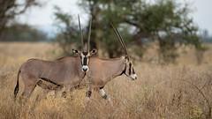 Meru National Park-7509