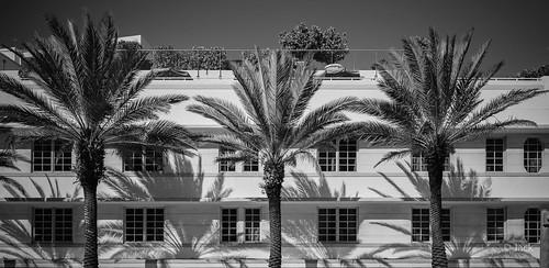 Miami mood - les trois palmiers