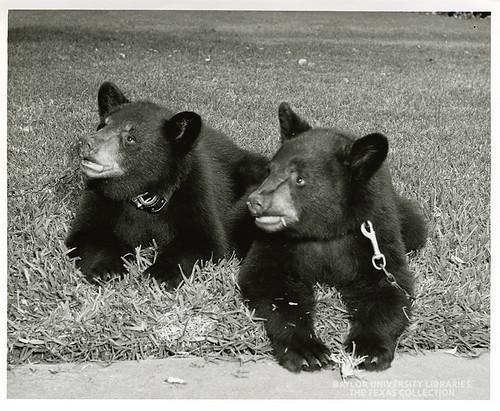 Baylor University-Bear Mascot-5-1950s
