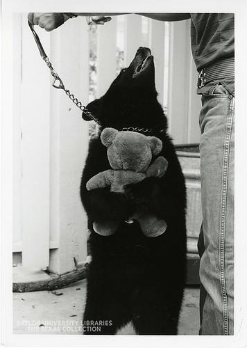 Baylor University-Bear Mascot-1980s