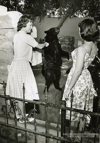 Baylor University-Bear Mascot-11-1950s