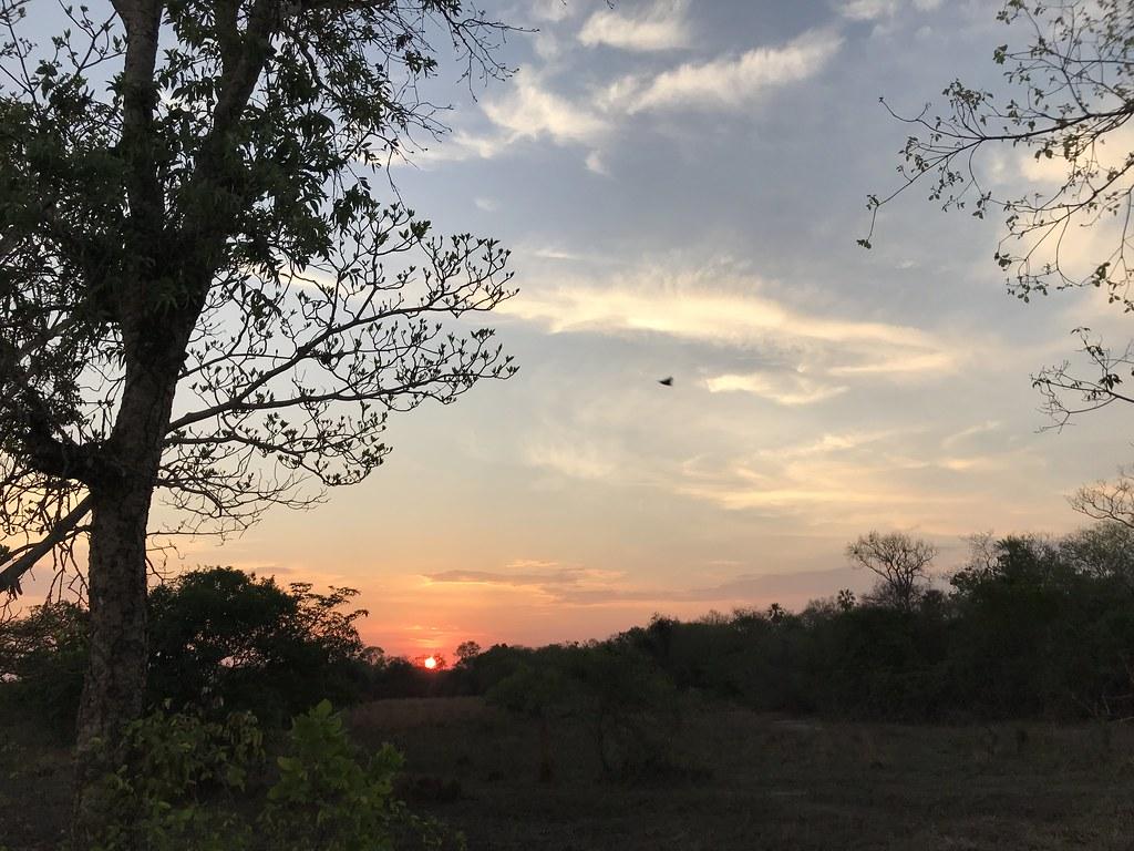 Pôr do sol no Pantanal, MT