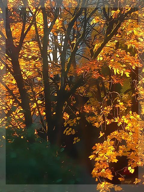 Autumn spins gold!