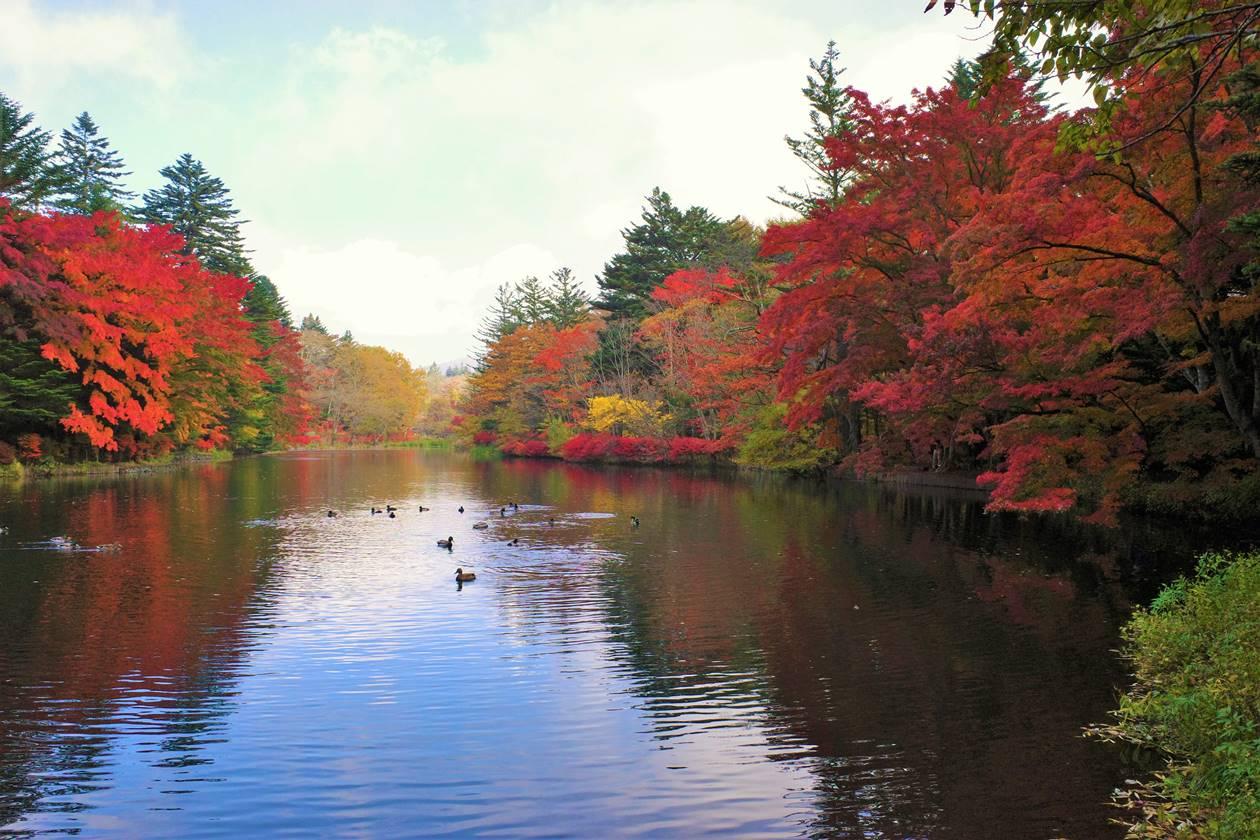 【軽井沢】雲場池の紅葉ハイキング