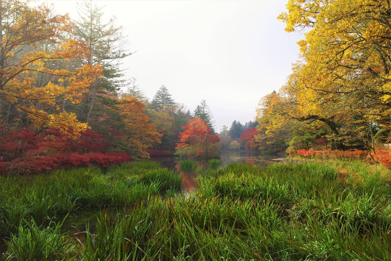 【軽井沢】雲場池 朝靄と紅葉