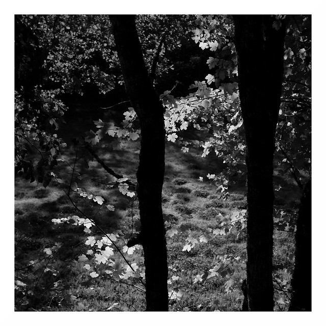 Quercy Leaves  #2