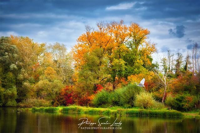 Like an Autumn Painting